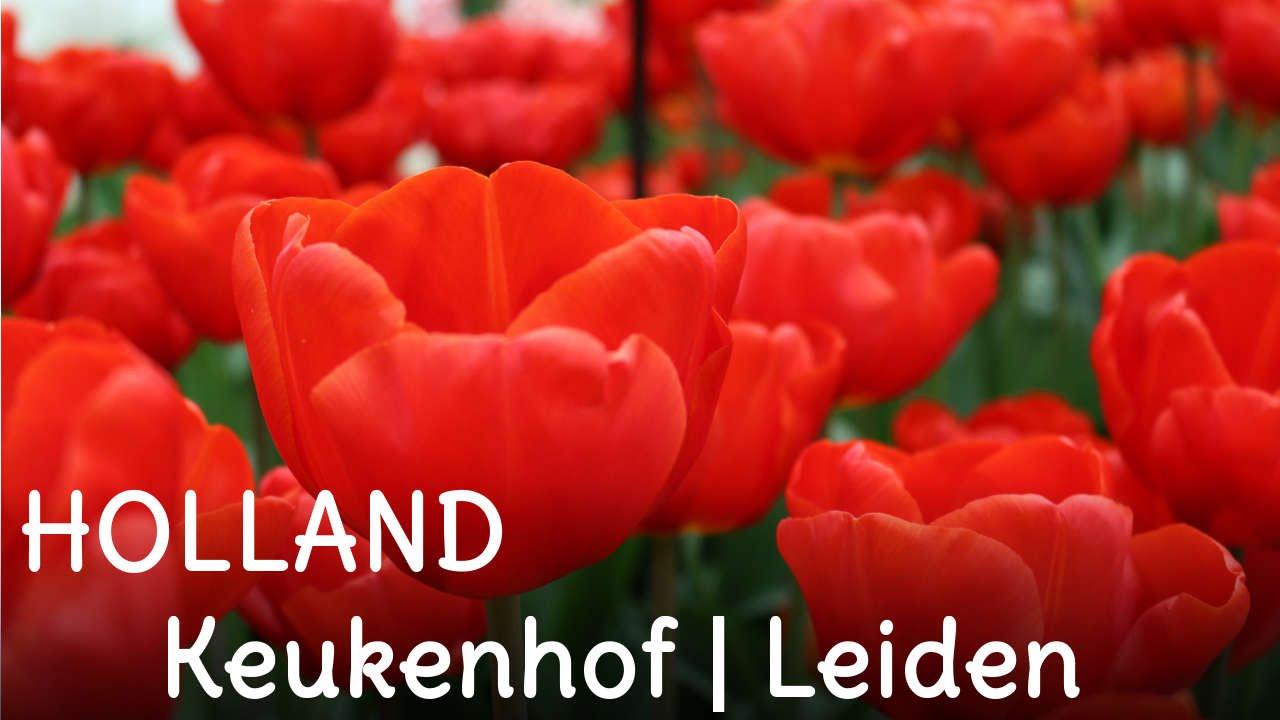 HOLLAND | Keukenhof | Leiden | SweetLifeSunShine